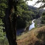 creek at Cooley Ranch
