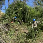 Partners clearing dense, green vegetation.