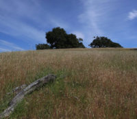 grassy hills at Cooley Ranch
