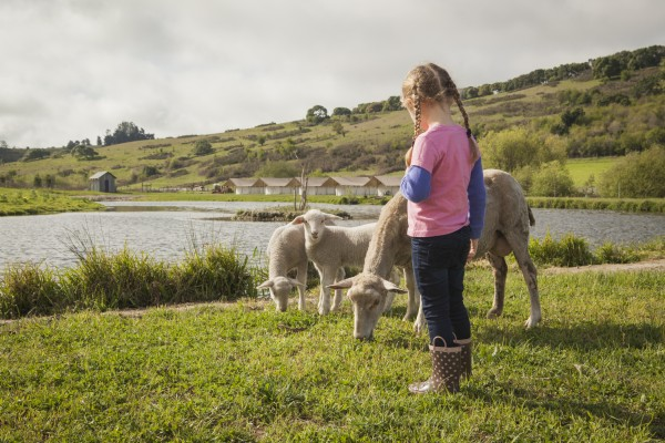 girl and sheep in green field at Nahmens, otherwise known as Duckworth Farms