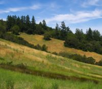 Sloping hillside at Beltane Ranch