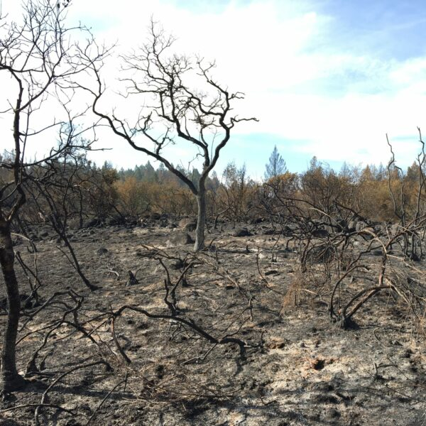 Saddle Mountain after the 2020 Glass Fire.