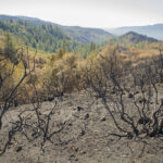 Calabazas Open Space Preserve after the 2017 Sonoma Complex fires