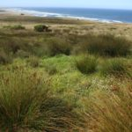 wild grasses of Carrington Coast Ranch