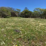 Green field with wildflowers.