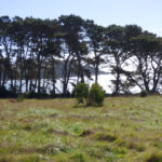 View of trees along the coastline at the Kashia Coastal Reserve.