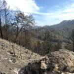 Saddle Mountain Open Space Preserve after the Glass Fire