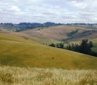 Rolling hills at Bianchi Dairy