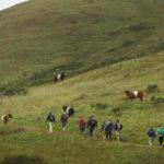 Several people walking up trail on green hillside
