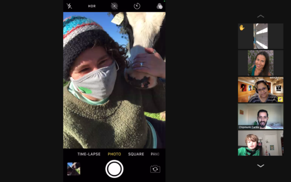 Zoom screenshot of LandPaths staff person with a cow at Taylor Mountain, during a live virtual classroom visit.