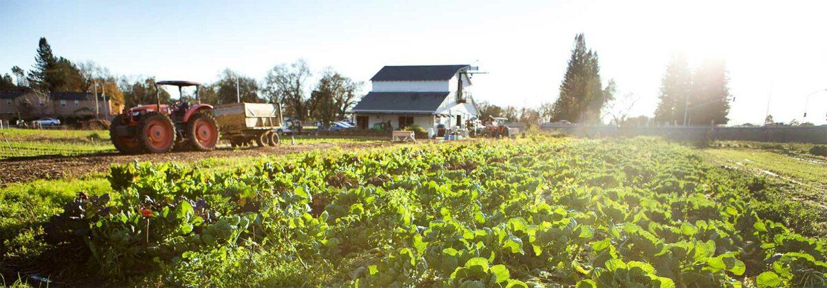 A Sonoma County farm